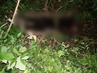 Phát hiện thi thể nữ trong rừng nghi là giáo viên mất tích