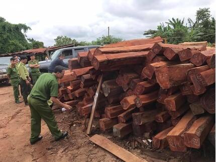 Bắt đối tượng bán số lượng gỗ lậu 'khủng' cho Doanh nghiệp