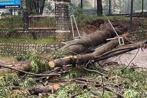 Người đàn ông bị cây đè tử vong khi trú mưa