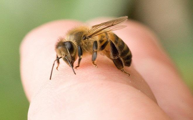 Xử trí như thế nào khi bị ong vò vẽ đốt