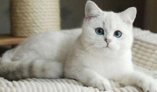 Phần lớn động vật có vú có nguy cơ mắc Covid-19