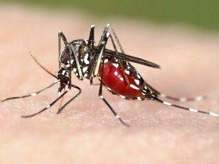 5.200 ca mắc bệnh sốt xuất huyết được ghi nhận tại Khánh Hòa