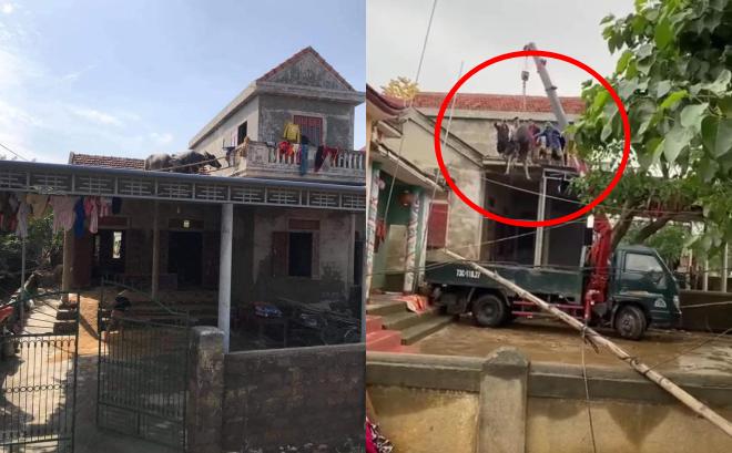 Pha 'hộ tống' 2 chú trâu trên mái nhà sau lũ khiến dân mạng bật cười