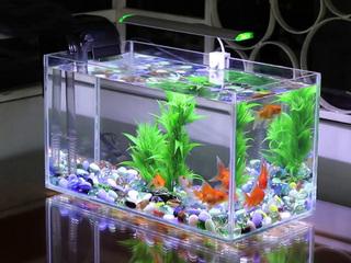 5 kiêng kỵ về phong thủy khi bày bể cá giúp gia đình thịnh vượng, phát tài phát lộc