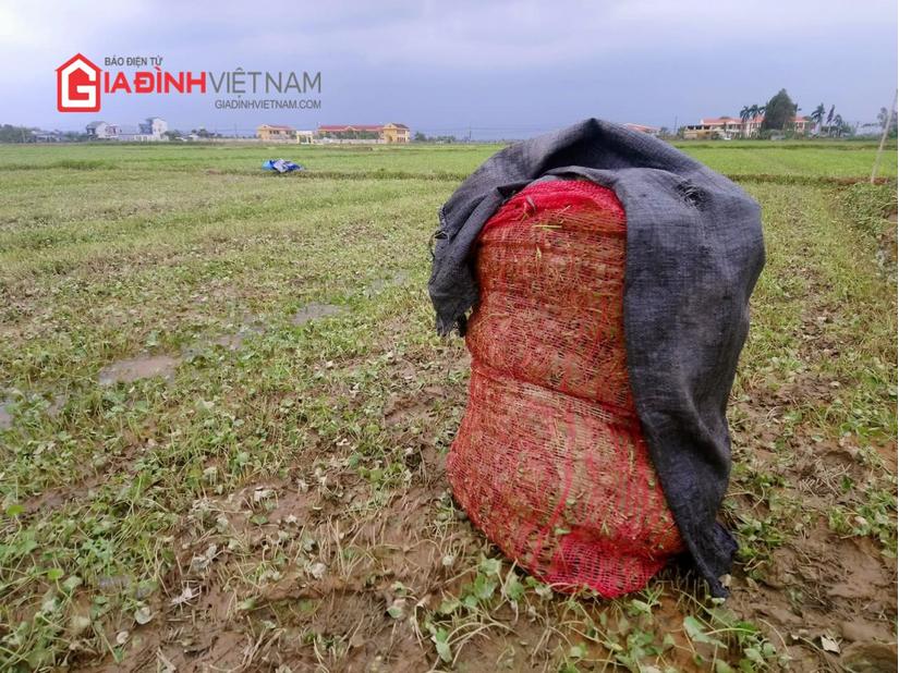 Vựa rau má hàng tỷ đồng tan hoang sau lũ
