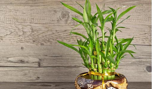 7 loại cây phong thủy vừa thanh lọc không khí vừa mang tài lộc, phú quý cho gia chủ