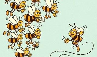 Khi đối mặt với khó khăn hãy suy nghĩ như một con ong
