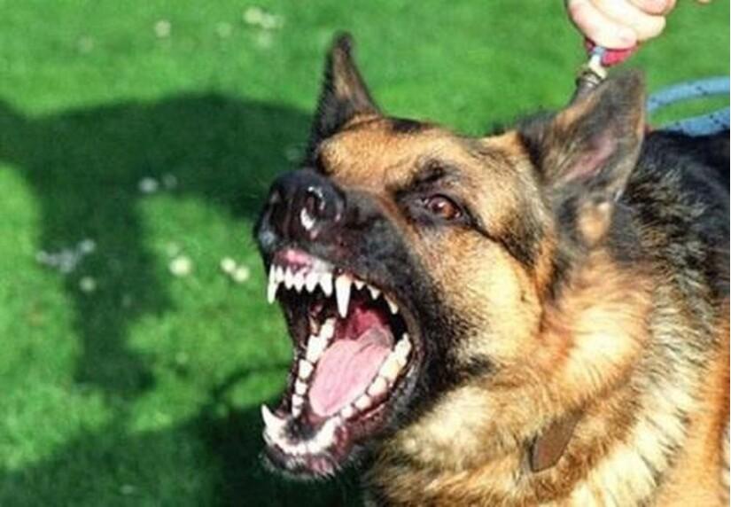 Tự điều trị vết thương chó nhà cắn, chân người phụ nữ bị nhiễm trùng nặng