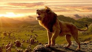 Bài học thành công từ cách sinh tồn của loài sư tử