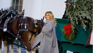 Đệ nhất phu nhân Melania Trump đón cây thông Noel tới Nhà Trắng