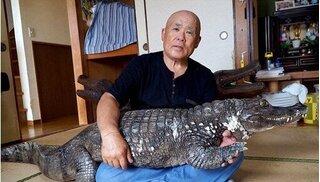 Người đàn ông nuôi cá sấu khổng lồ như thú cưng gần 40 năm