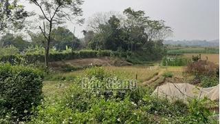 Hé lộ nguyên nhân đôi nam nữ tử vong trong lều cá ở Bắc Giang