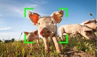 TQ: Nhận diện khuôn mặt cho lợn, người giàu vui mừng, người nghèo lo phá sản