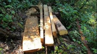 Yên Bái: Kỷ luật hàng loạt cán bộ vụ rừng Khu bảo tồn 'chảy máu'