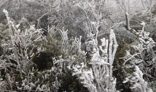 Đỉnh Mẫu Sơn xuống 1 độ C, nhiều nơi ở miền Bắc chìm trong giá rét