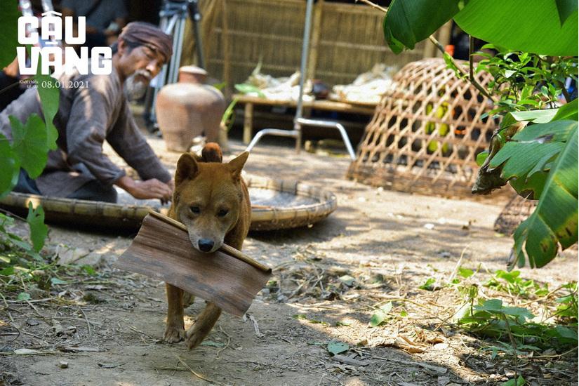 Hé lộ hậu trường huấn luyện chú chó giống Nhật đóng phim 'Cậu Vàng'