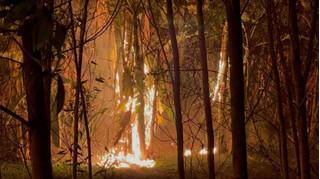 Hàng cây giữa dải phân cách trên Đại lộ Thăng Long cháy ngùn ngụt