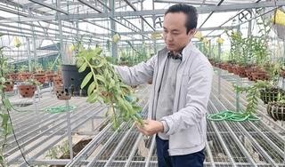 Chàng kỹ sư xây dựng bỏ nghề vì niềm đam mê bất tận với hoa phong lan