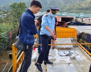 Phó Thủ tướng chỉ đạo làm rõ cá tầm Trung Quốc 'đội lốt' cá tầm Việt