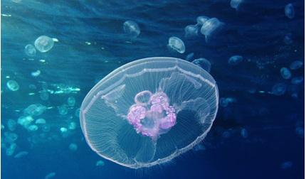 """Robot sứa mặt trăng như """"vận động viên bơi lội"""" siêu đỉnh"""