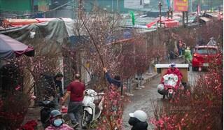 Chợ hoa lớn nhất Hà Nội: Tất bật phục vụ nhu cầu chơi Tết