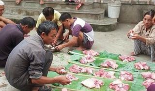 Đặc sắc nét đụng lợn trong ngày Tết Tuyên Quang