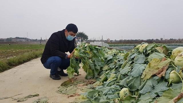 Hàng hóa nông sản Hải Dương vẫn 'tắc' do quy định của Hải Phòng