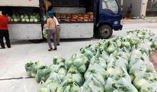 Hải Dương: 10.000 tấn rau củ cần bán gấp nhưng quyết không bán hàng kém chất lượng