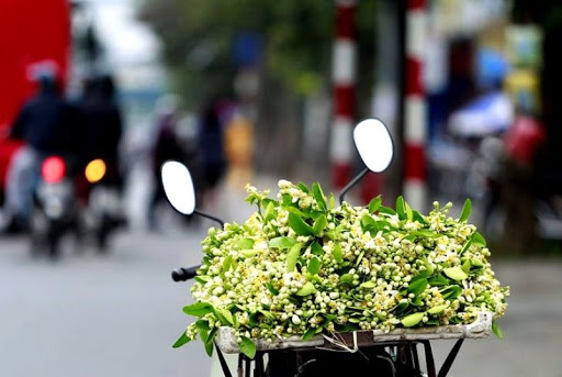 350.000 đồng/kg, dân Hà thành vẫn đua nhau mua hoa bưởi về cúng Rằm tháng Giêng