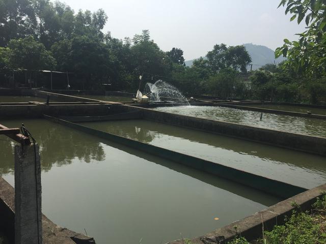 Sau hàng loạt chỉ đạo 'nóng' của Chính phủ và Bộ ngành, cá tầm Trung Quốc vẫn ồ ạt về Việt Nam