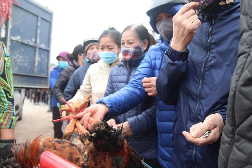 Người Hà Nội xếp hàng dài hàng trăm mét trực chờ giải cứu gà đồi Hải Dương