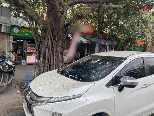 Đỗ ô tô gần gốc cây, chủ xe choáng váng khi thấy xế hộp bị ăn nguyên bát phở