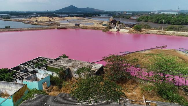 Cận cảnh đầm nước màu hồng vì bị uống nước thải