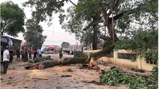 Vụ cây đa 300 tuổi ở Nghệ An gãy đổ đè 4 học sinh tiểu học: Một bé phải chuyển ra Hà Nội điều trị
