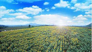 Mãn nhãn những cánh đồng châu Âu giữa lòng xứ Nghệ