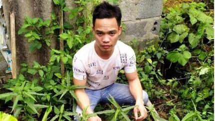 Nam Định: Xử lý 3 đối tượng trồng cần sa trái phép để ...ngâm rượu và nuôi gà chọi