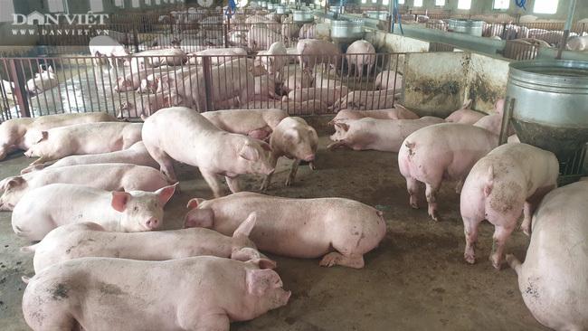 Sau một năm nuôi lợn trúng đậm, có một ông nông dân bỏ tiền tỷ mua ô tô Vinfast Lux SA