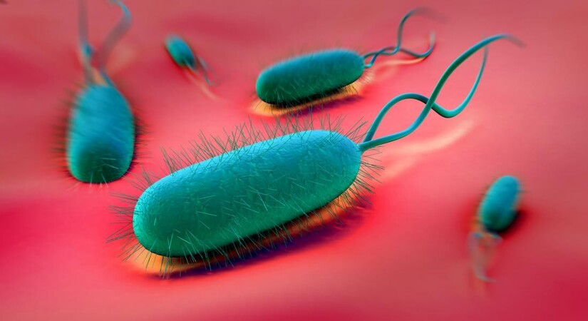 vi khuẩn HP dạ dày