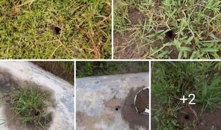 Thái Bình: Hàng trăm ngôi mộ bị dùi thủng lỗ