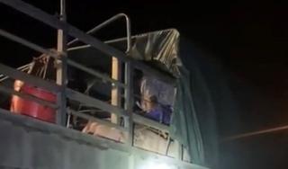 Gần 20 người trốn trong xe chở lợn để qua mắt chốt kiểm soát dịch
