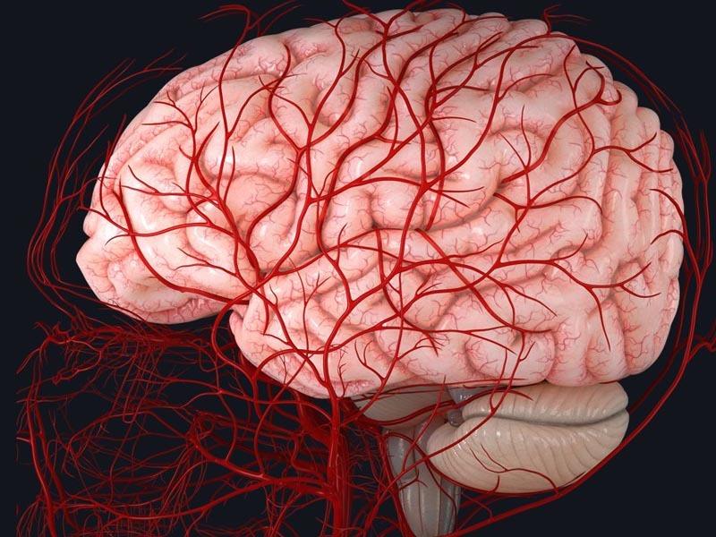 Máu không lưu thông lên não