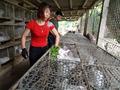 Nam Định: Gái xinh nuôi 700 'cục bông' di động, kiếm chục triệu/tháng