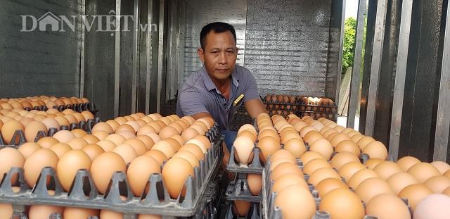 Nam Định có 1 tỷ phú nuôi gà đẻ vừa 'nín thở' chờ giá trứng tăng