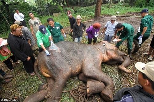 hình ảnh giọt nước mắt của chú voi