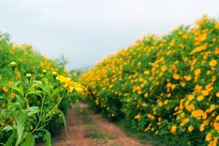 Những cánh đồng hoa Đà Lạt khiến du khách ở mãi không muốn về